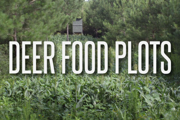 deer-food-plots-text