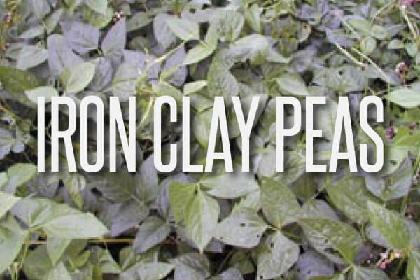 iron-clay-peas-text